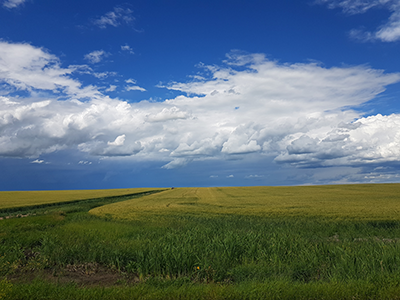 Fiscal Planning and Sustainability in Alberta